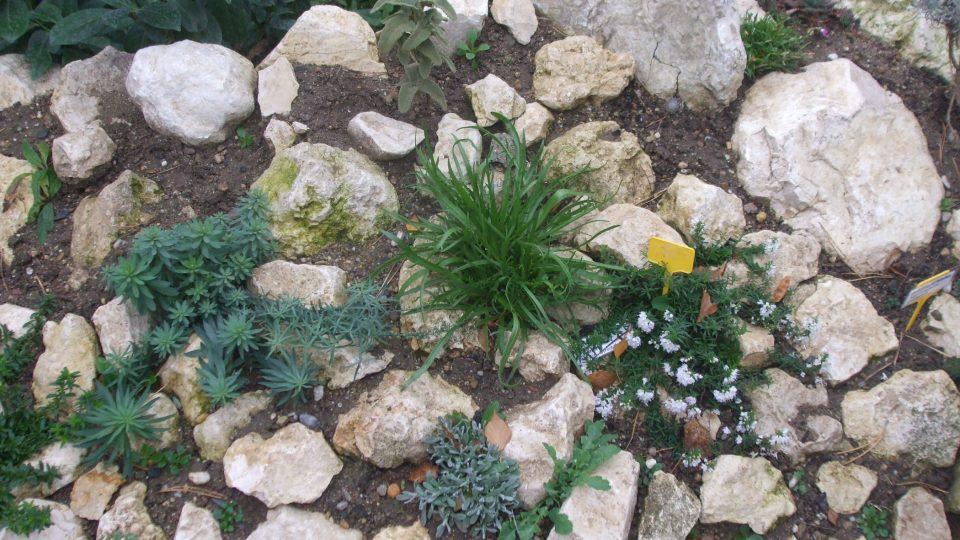 Středomořské skalničky