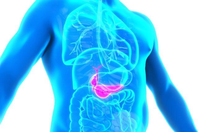 Anatomie lidského žlučníku a pankreatu