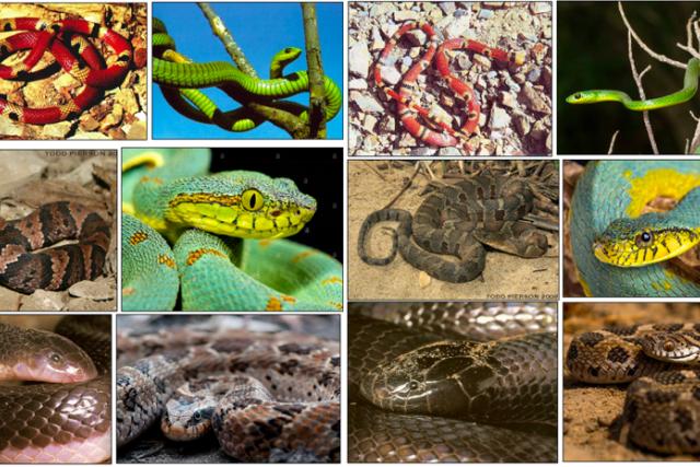 První vítězství v tomto roce získal Lukáš Picek vytvořením počítačového softwaru pro Institute of Global Health v Ženevě, který má lidem pomoci rozeznávat nebezpečné druhy hadů, a to na základě pořízené fotografie